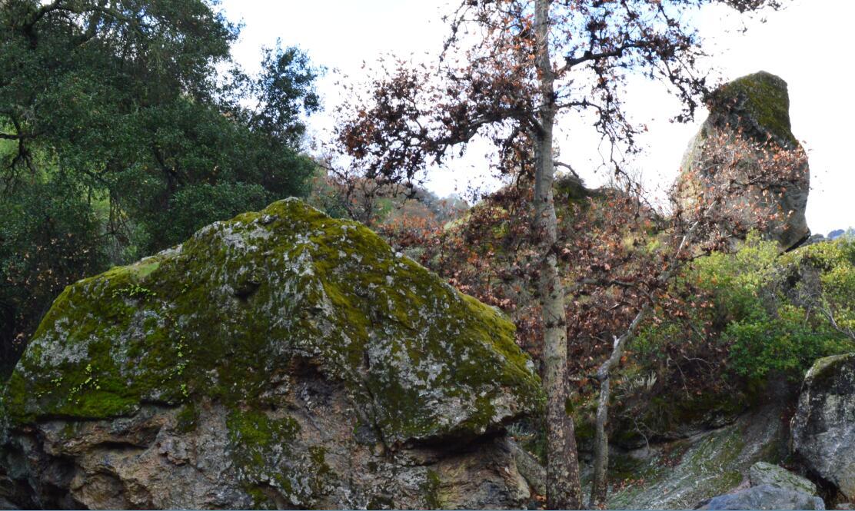 sunol regional wilderness10_1