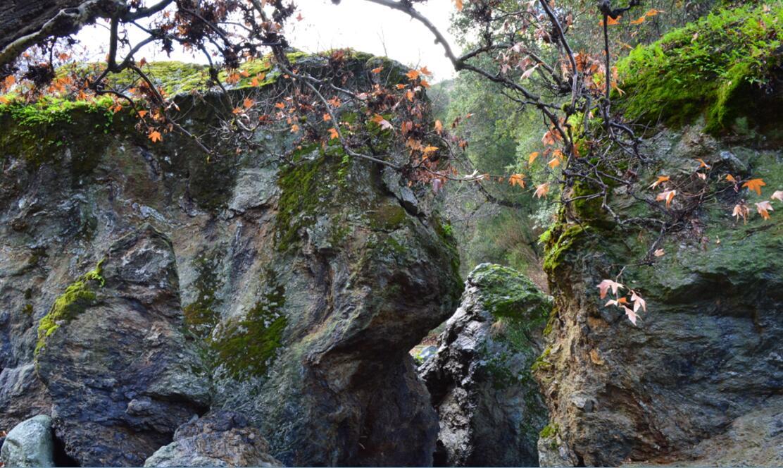 sunol regional wilderness10_3