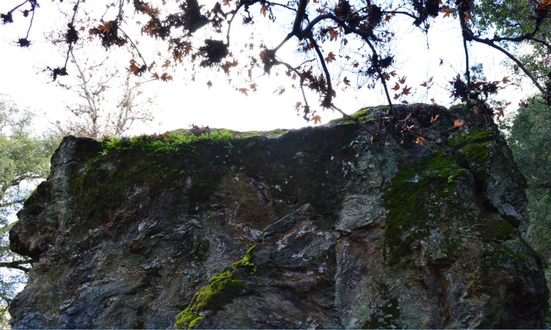sunol regional wilderness10_4
