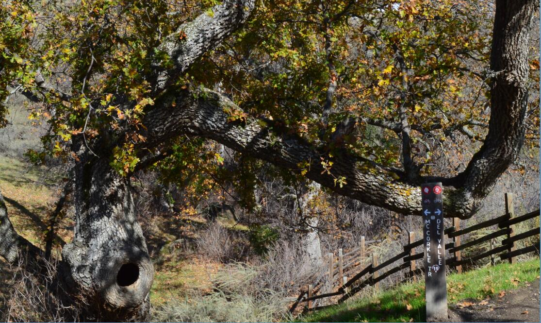 sunol regional wilderness23