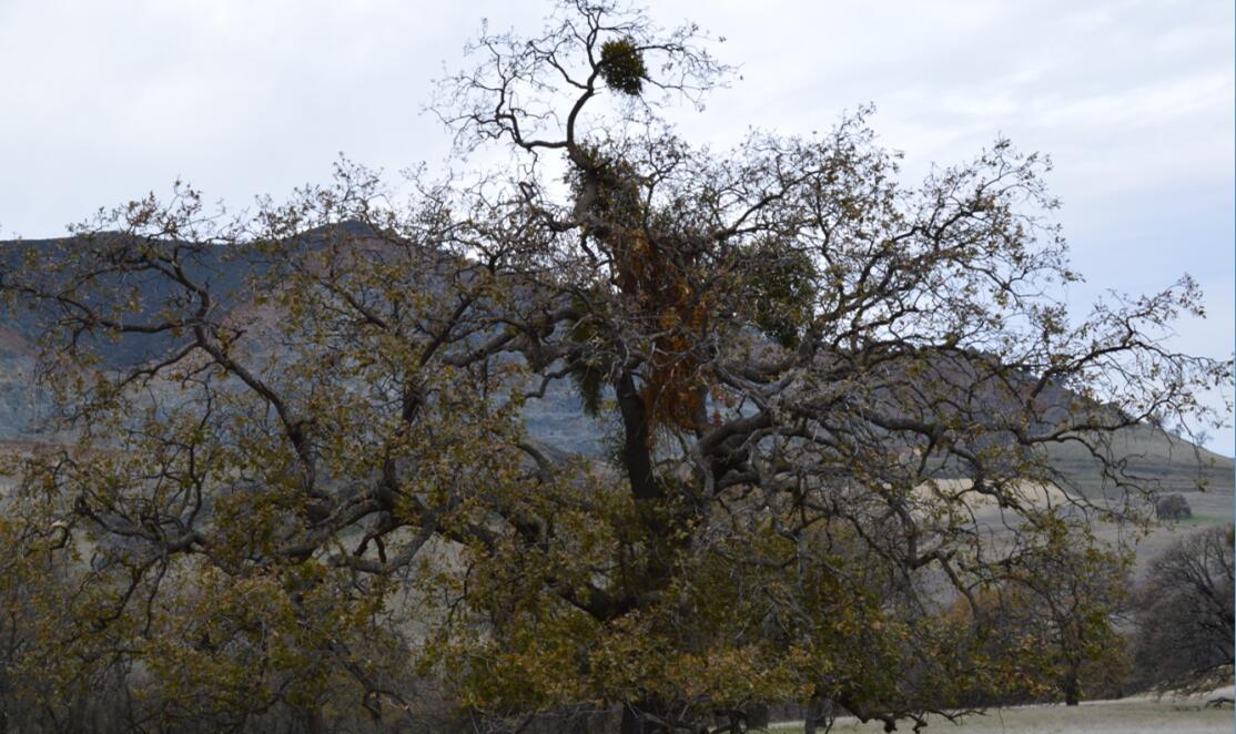 Mount Diablo Eagle Peak Trail57