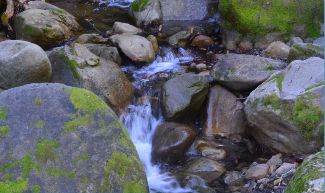 Uvas Canyon County Park Waterfall Loop3_0