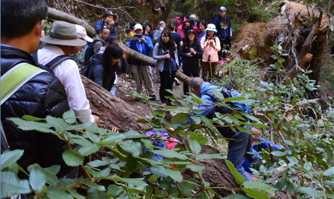 Big Basin Redwoods State Park Berry Creek Falls Loop15