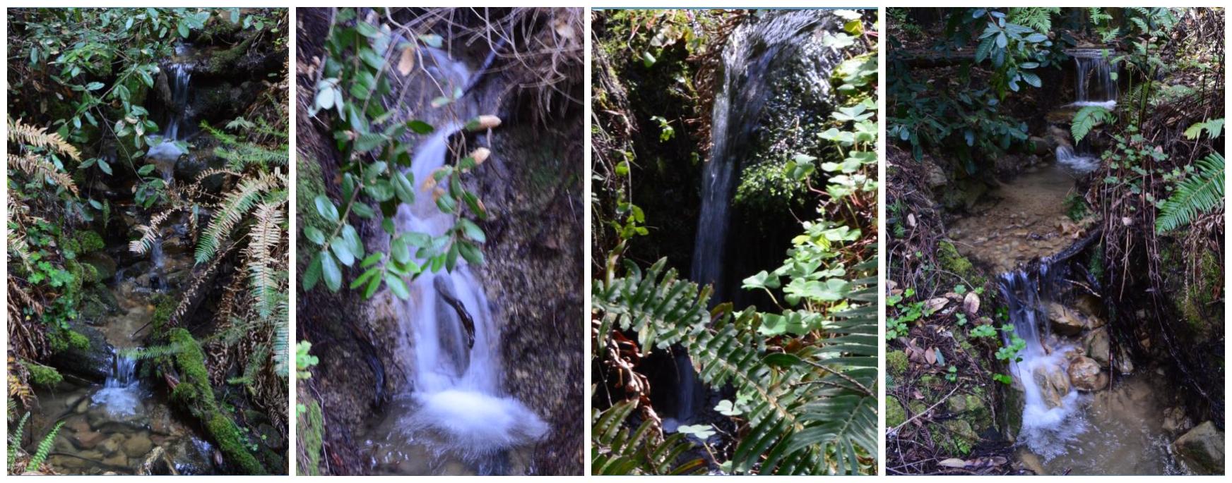 Big Basin Redwoods State Park Berry Creek Falls Loop17_5