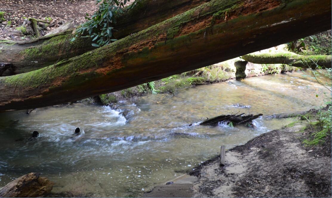Big Basin Redwoods State Park Berry Creek Falls Loop22