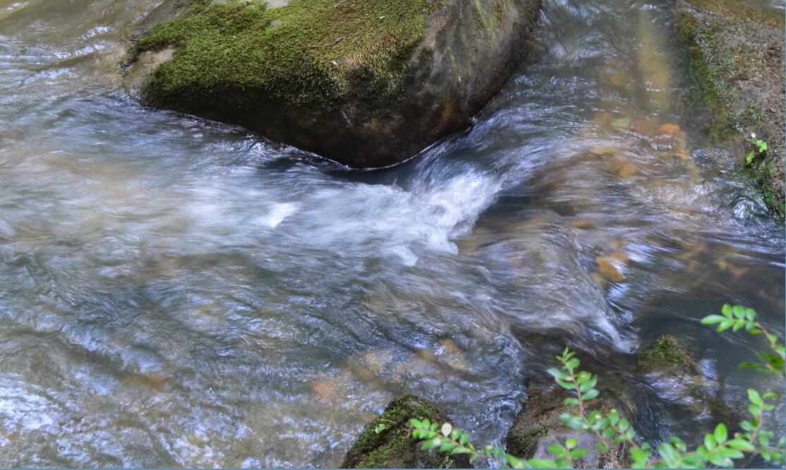 Big Basin Redwoods State Park Berry Creek Falls Loop24