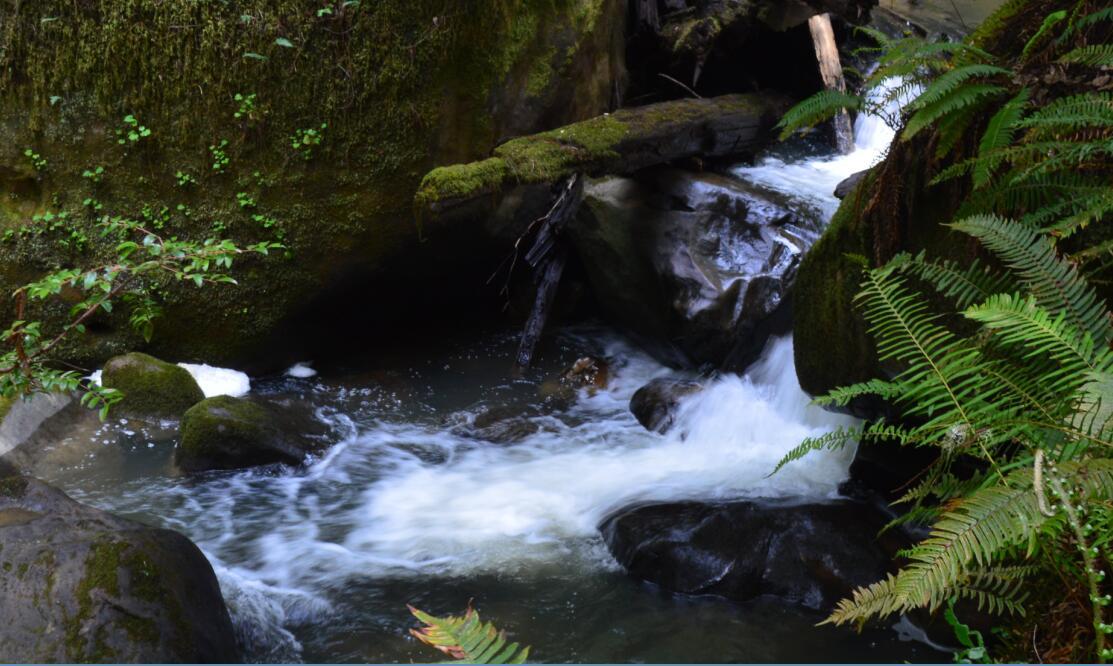 Big Basin Redwoods State Park Berry Creek Falls Loop31