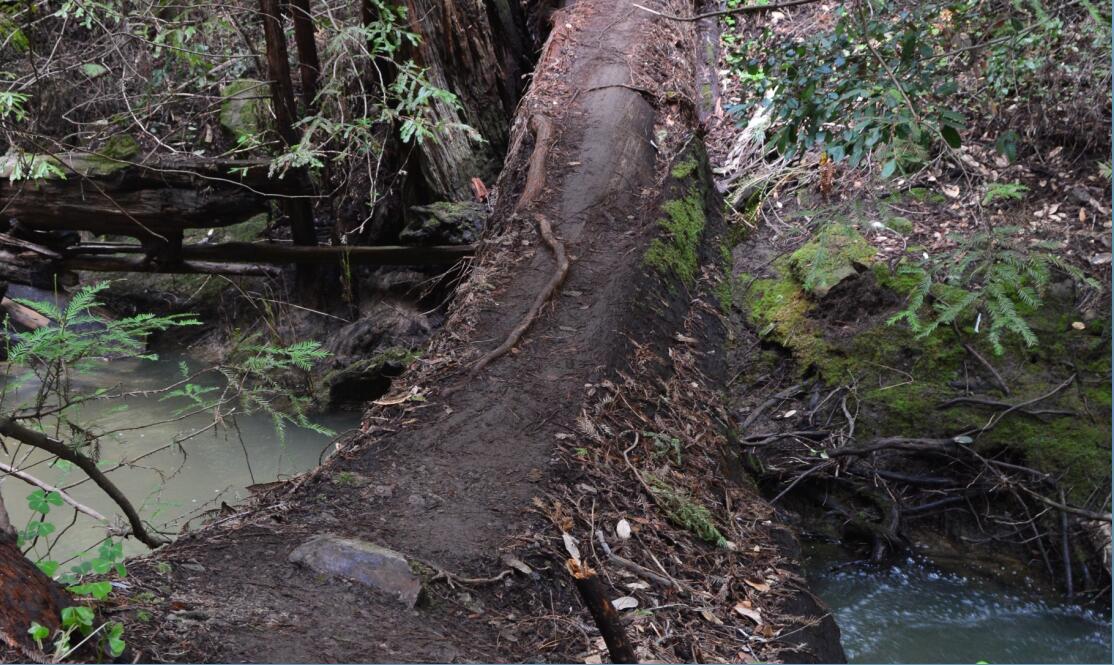 Big Basin Redwoods State Park Berry Creek Falls Loop38