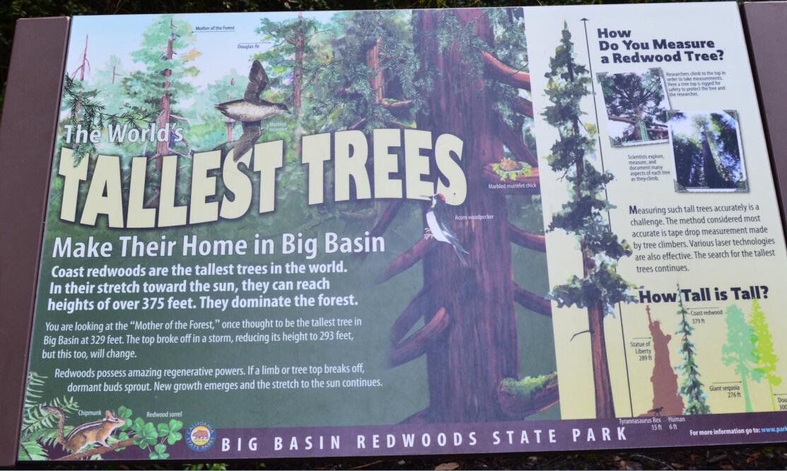 Big Basin Redwoods State Park Berry Creek Falls Loop4