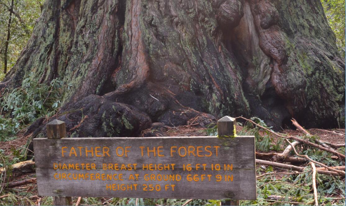Big Basin Redwoods State Park Berry Creek Falls Loop5