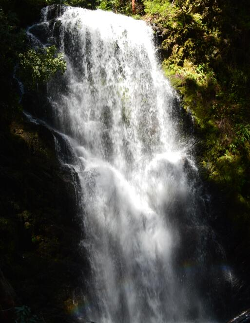 Big-Basin-Redwoods-State-Park-Berry-Creek-Falls-Loop50_4.jpg