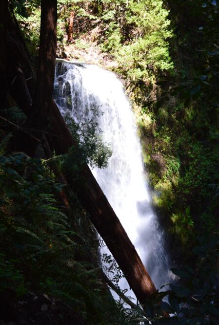 Big Basin Redwoods State Park Berry Creek Falls Loop51_1