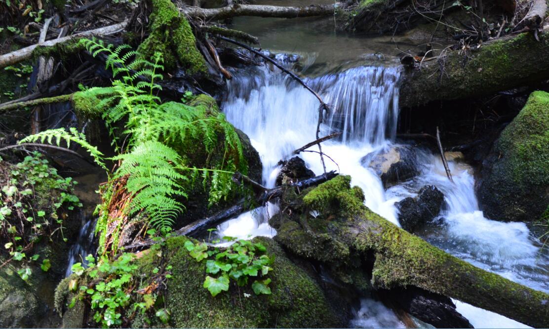 Big Basin Redwoods State Park Berry Creek Falls Loop55