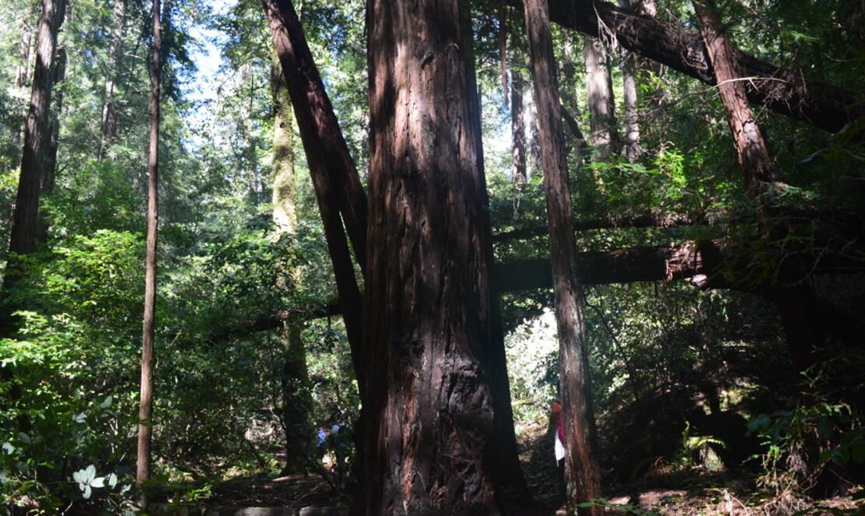 Big Basin Redwoods State Park Berry Creek Falls Loop57