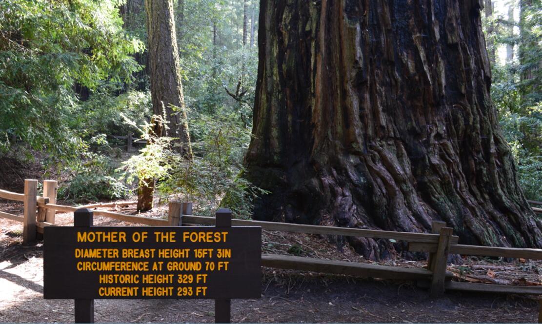 Big Basin Redwoods State Park Berry Creek Falls Loop6