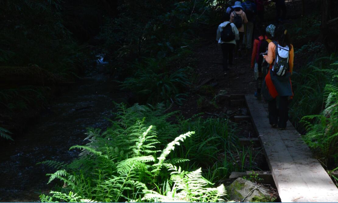 Big Basin Redwoods State Park Berry Creek Falls Loop60