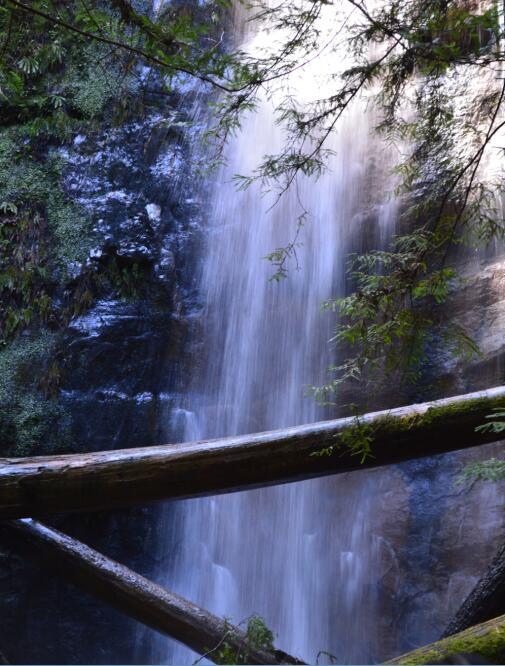 Big Basin Redwoods State Park Berry Creek Falls Loop61_1