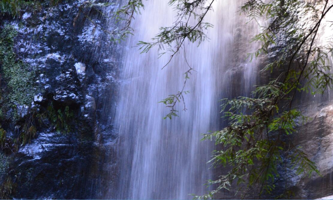 Big Basin Redwoods State Park Berry Creek Falls Loop61_2