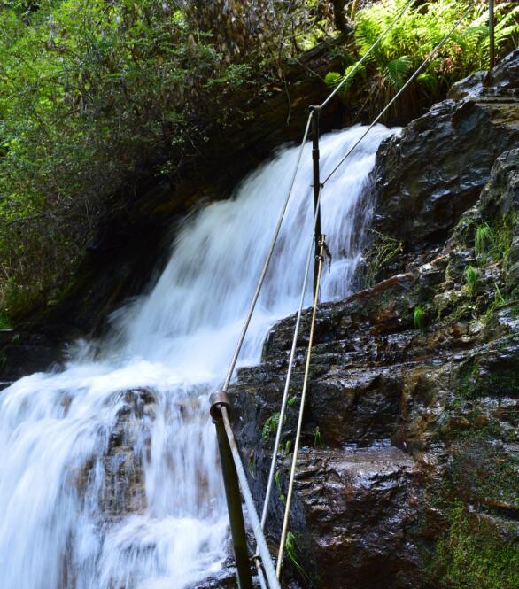 Big Basin Redwoods State Park Berry Creek Falls Loop61_3