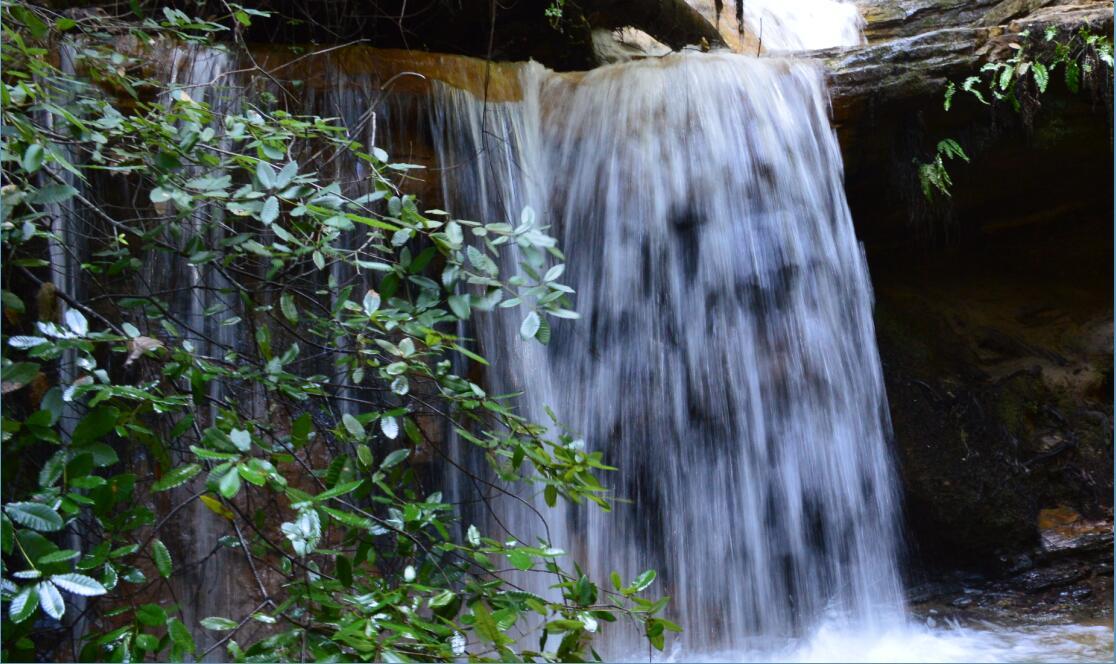 Big Basin Redwoods State Park Berry Creek Falls Loop62