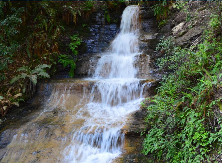 Big Basin Redwoods State Park Berry Creek Falls Loop62_3