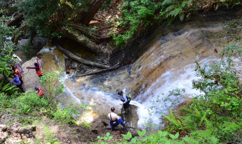 Big Basin Redwoods State Park Berry Creek Falls Loop62_5
