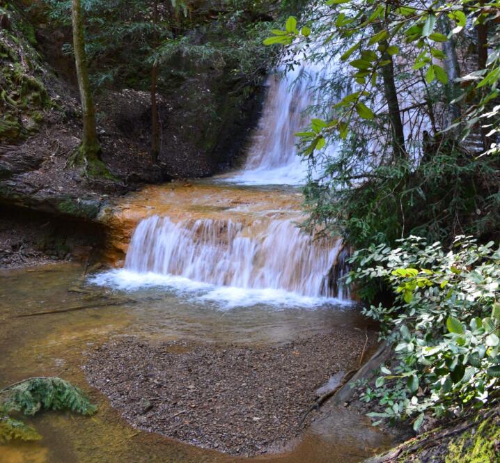 Big Basin Redwoods State Park Berry Creek Falls Loop63
