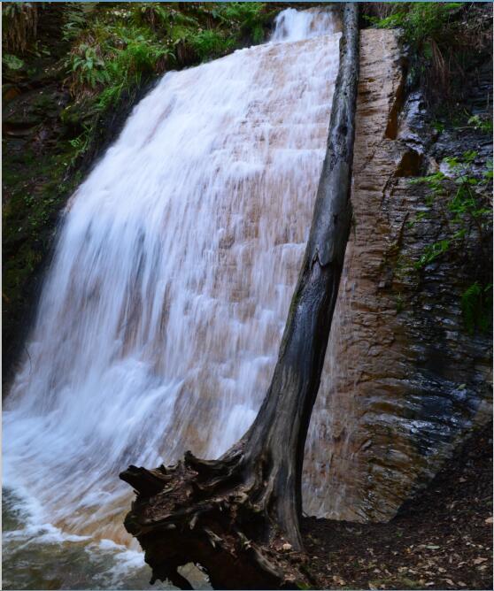 Big Basin Redwoods State Park Berry Creek Falls Loop63_1