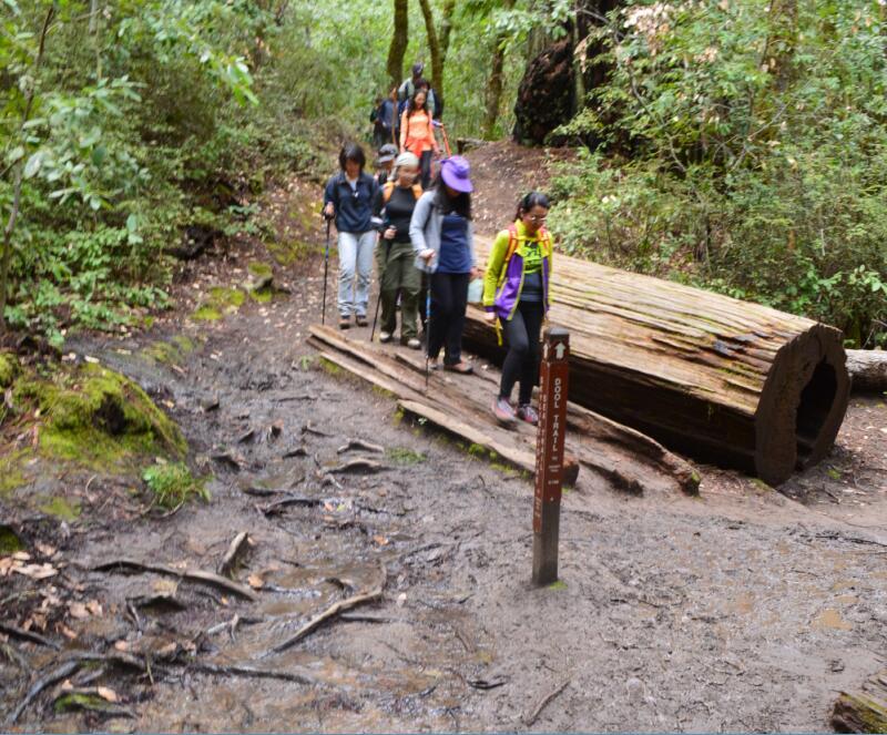 Big Basin Redwoods State Park Berry Creek Falls Loop71