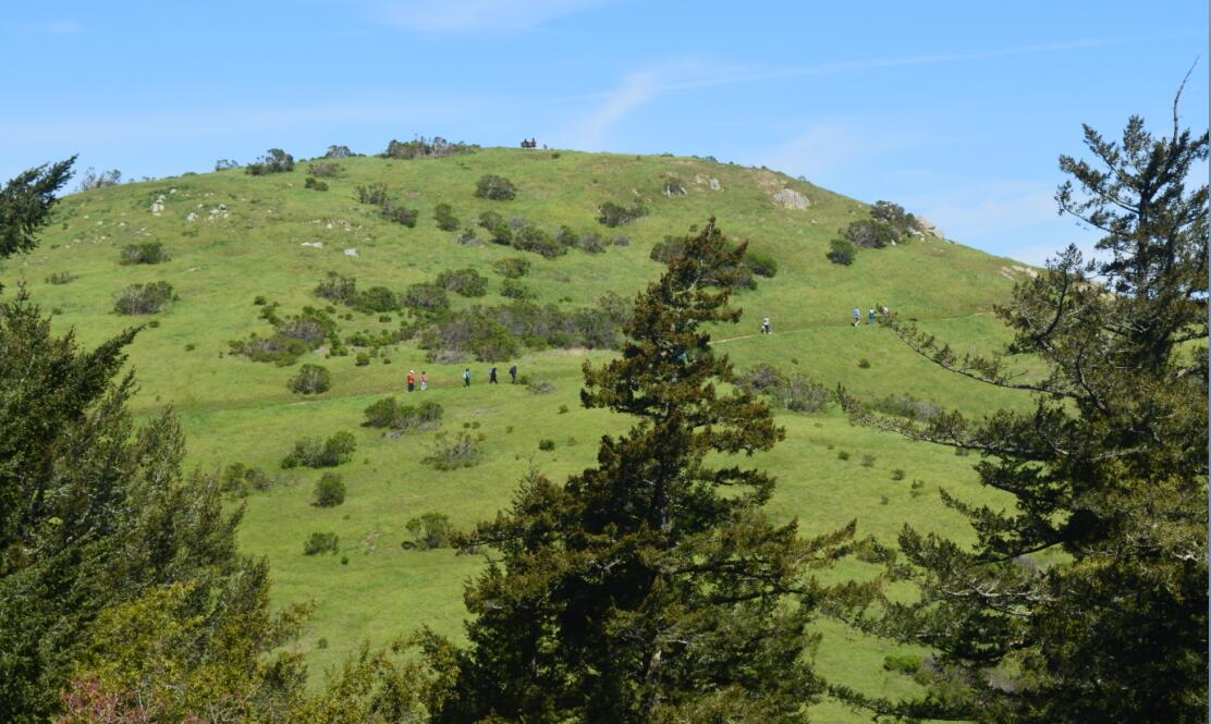 Windy Hill Open Space Preserve19_12
