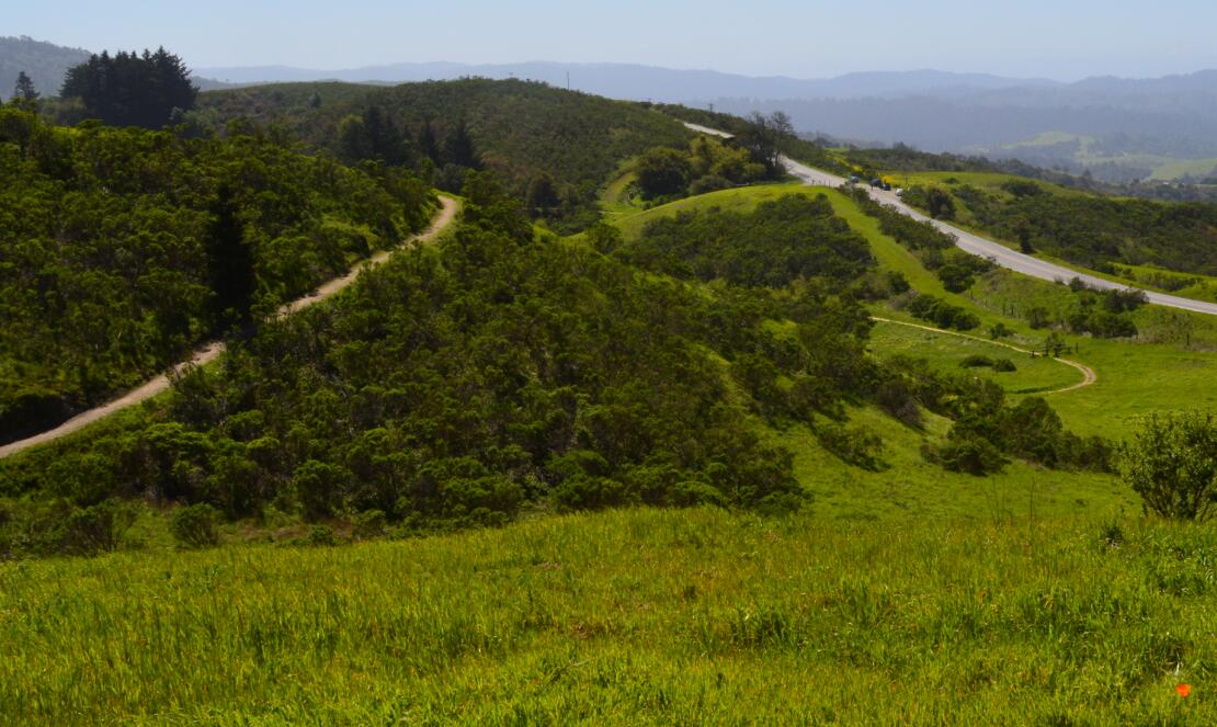 Windy Hill Open Space Preserve6
