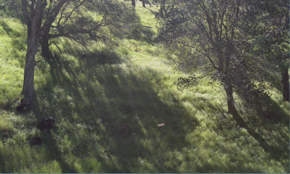 Round Valley Regional Preserve6