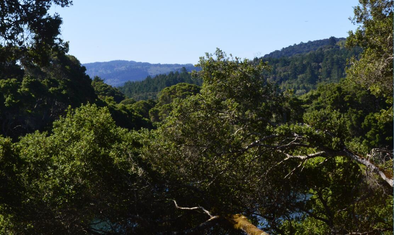 sawyer camp trail6
