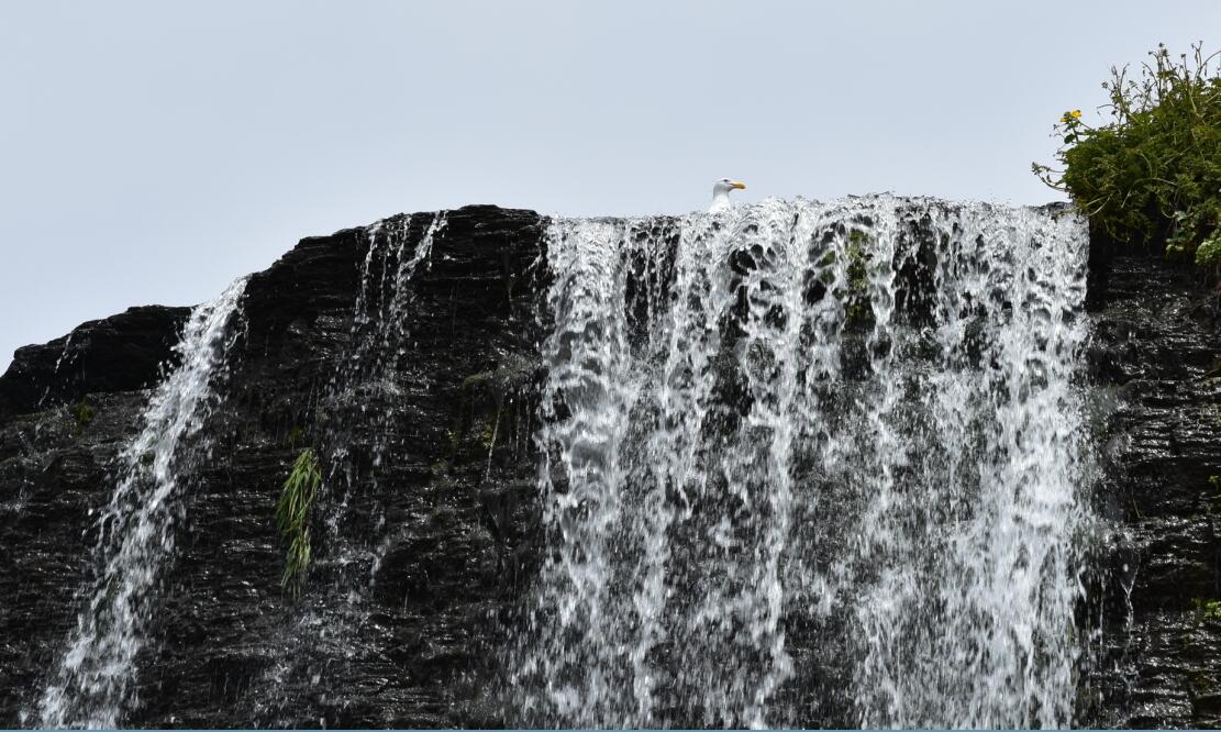Alamere Falls39_5