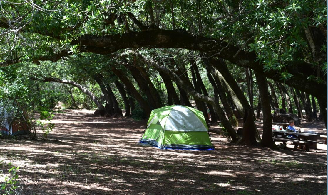 Mt Diablo Summit Trail-juniper campground