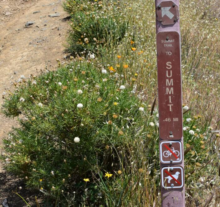 Mt Diablo Summit Trail23