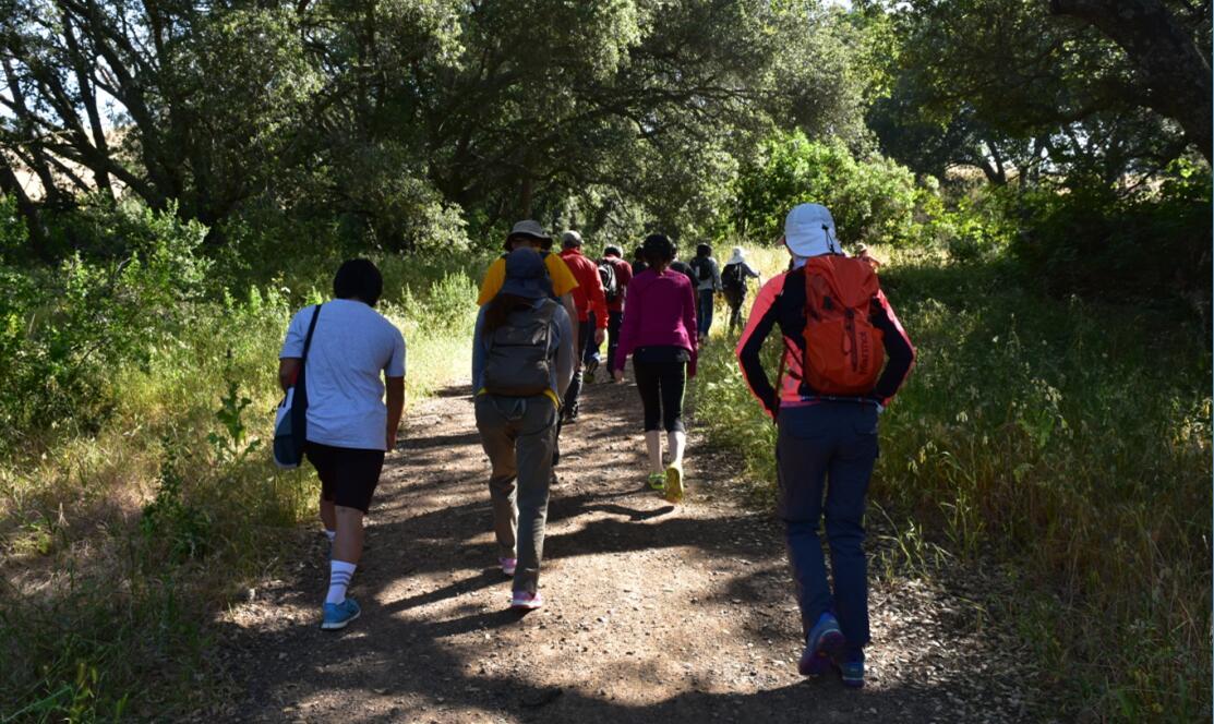 Mt Diablo Summit Trail3
