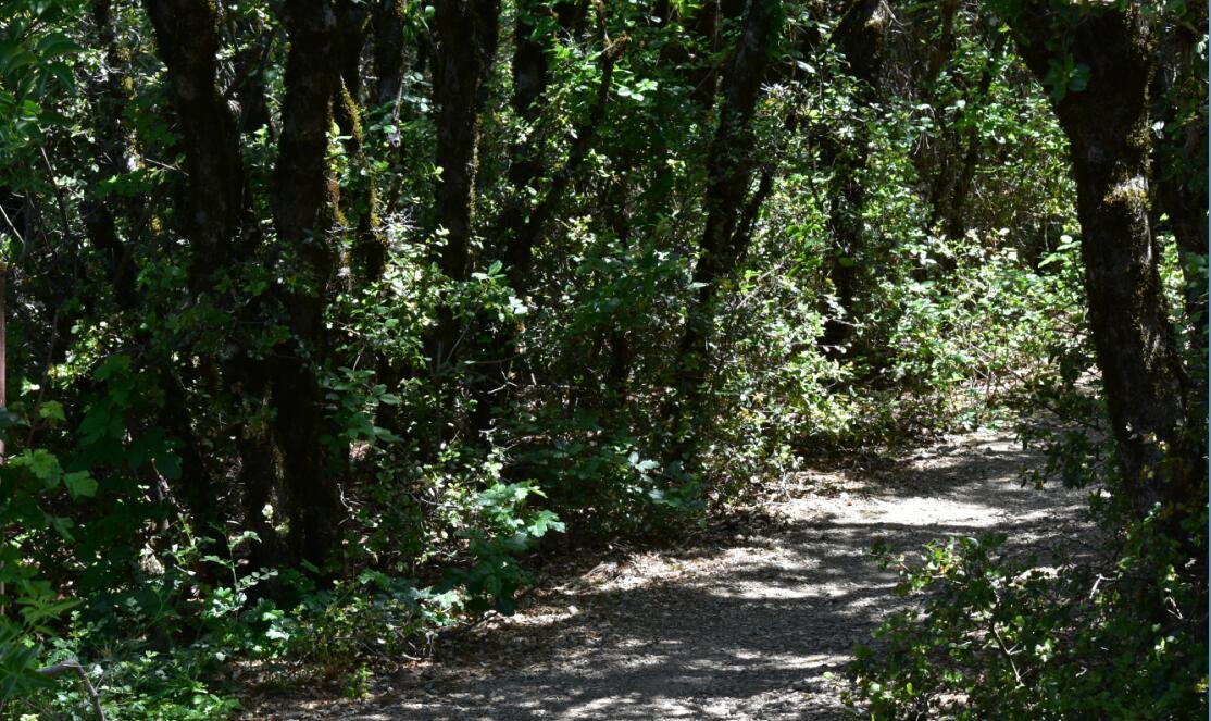 Mt Diablo Summit Trail32