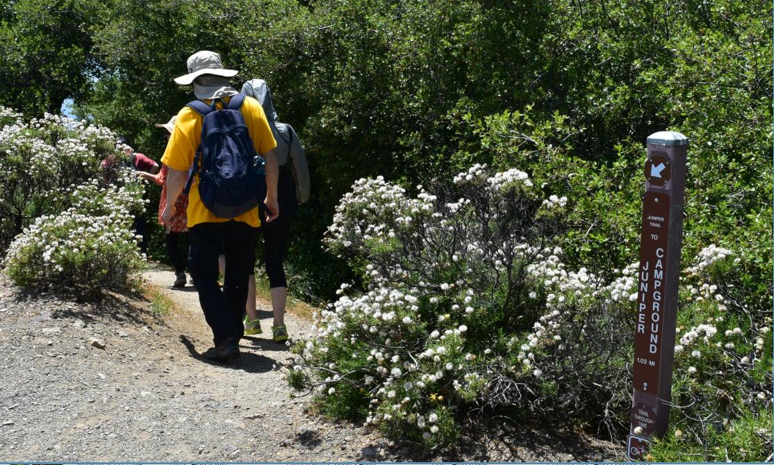 Mt Diablo Summit Trail52