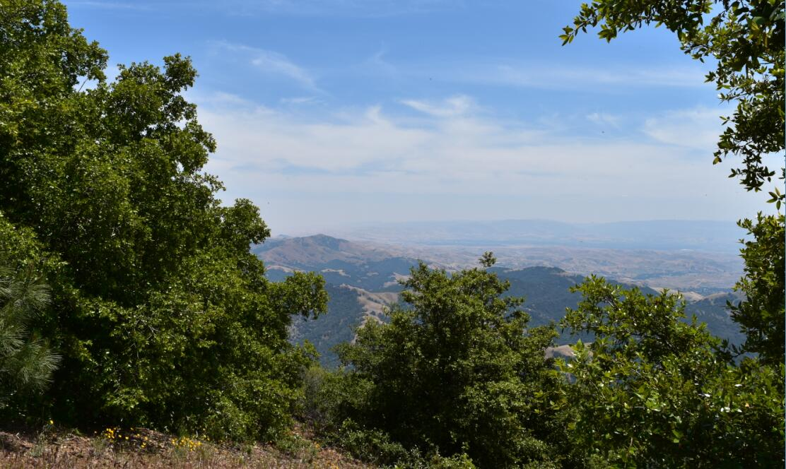 Mt Diablo Summit Trail53