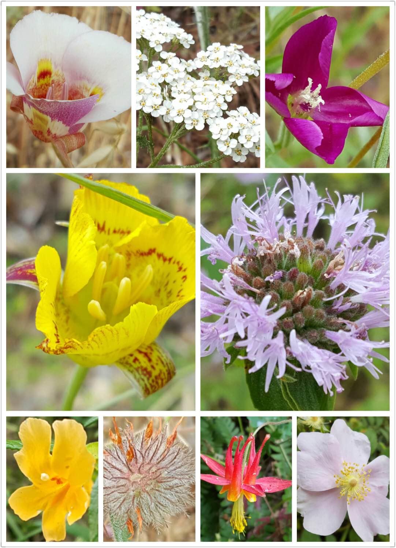Rancho San Antonio County Park_flowers