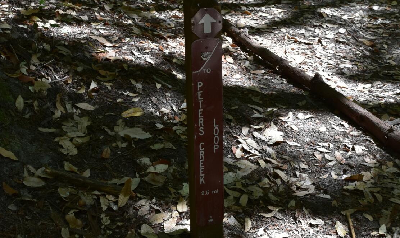 portola redwoods state park10