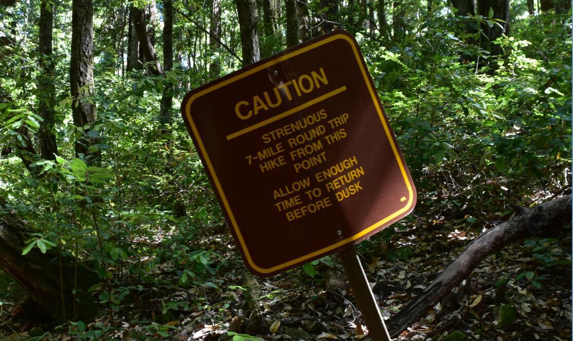 portola redwoods state park10_0