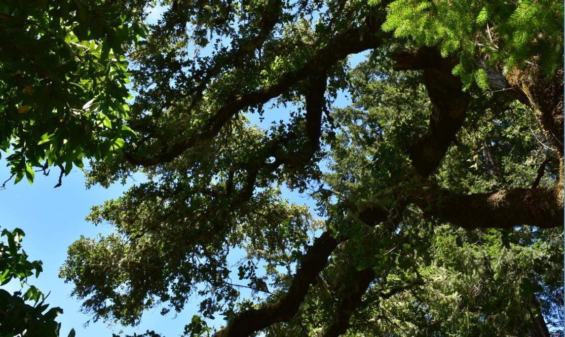 portola redwoods state park13
