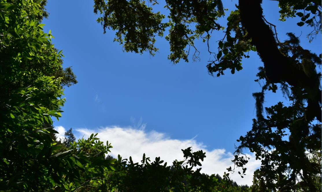 portola redwoods state park14