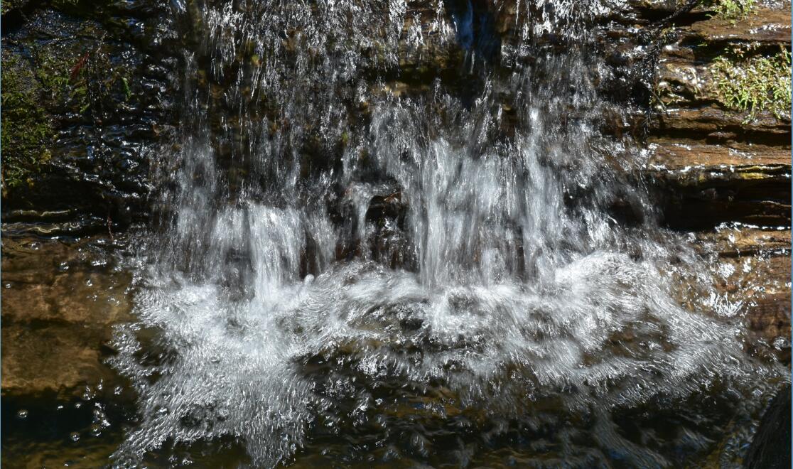 portola redwoods state park17