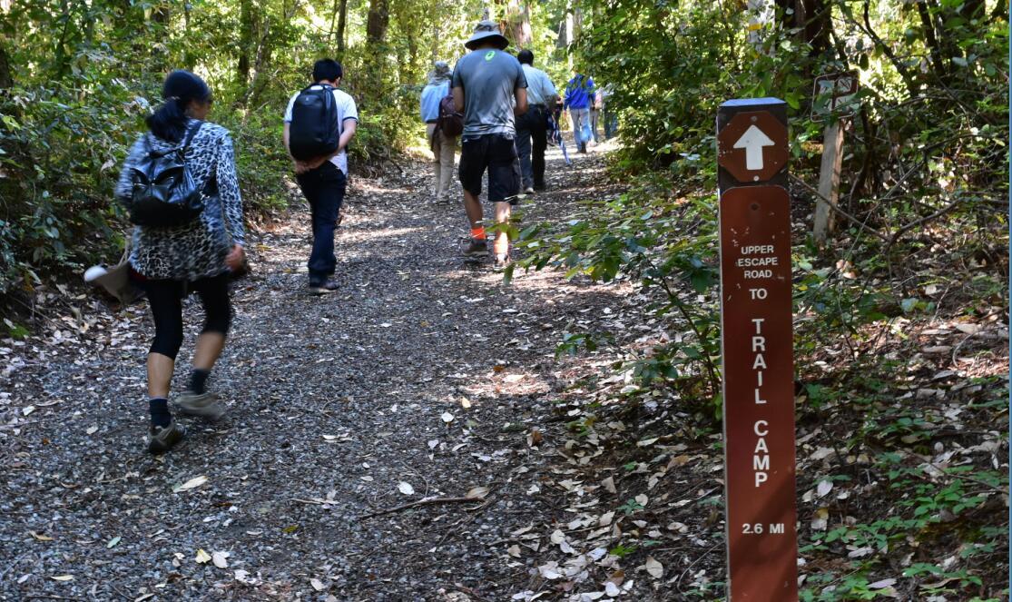 portola redwoods state park2