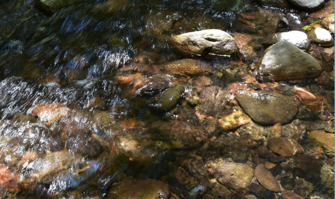 portola redwoods state park20