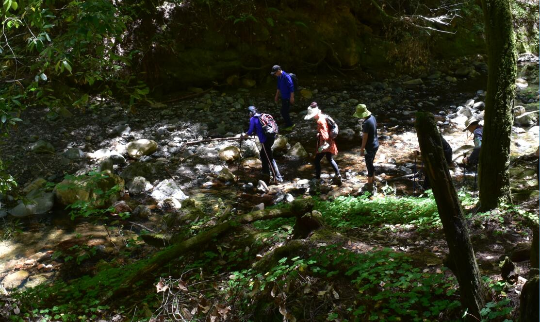 portola redwoods state park21