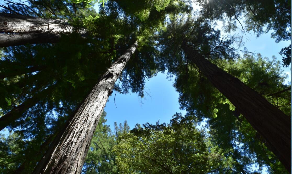 portola redwoods state park23